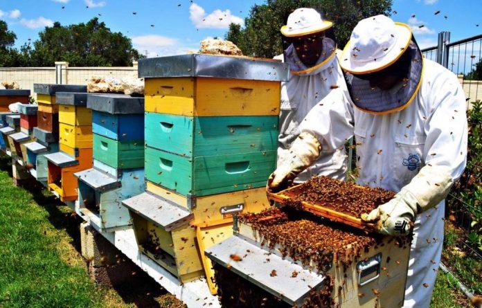 apicoltore alveare api regione del veneto miele api ape